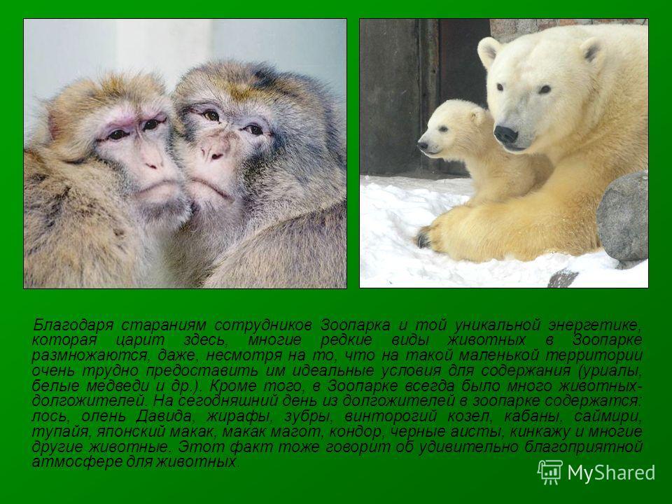 Благодаря стараниям сотрудников Зоопарка и той уникальной энергетике, которая царит здесь, многие редкие виды животных в Зоопарке размножаются, даже, несмотря на то, что на такой маленькой территории очень трудно предоставить им идеальные условия для