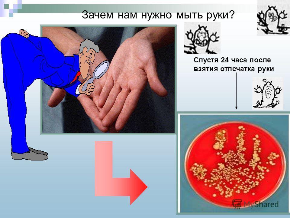 Спустя 24 часа после взятия отпечатка руки Зачем нам нужно мыть руки?