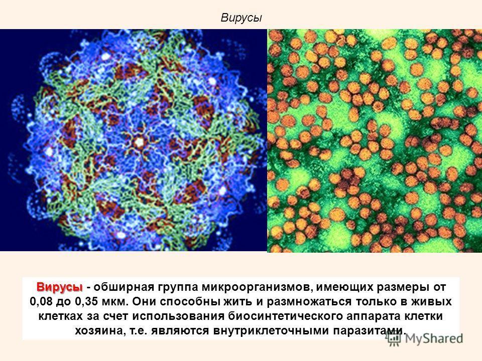 Вирусы Вирусы - обширная группа микроорганизмов, имеющих размеры от 0,08 до 0,35 мкм. Они способны жить и размножаться только в живых клетках за счет использования биосинтетического аппарата клетки хозяина, т.е. являются внутриклеточными паразитами.