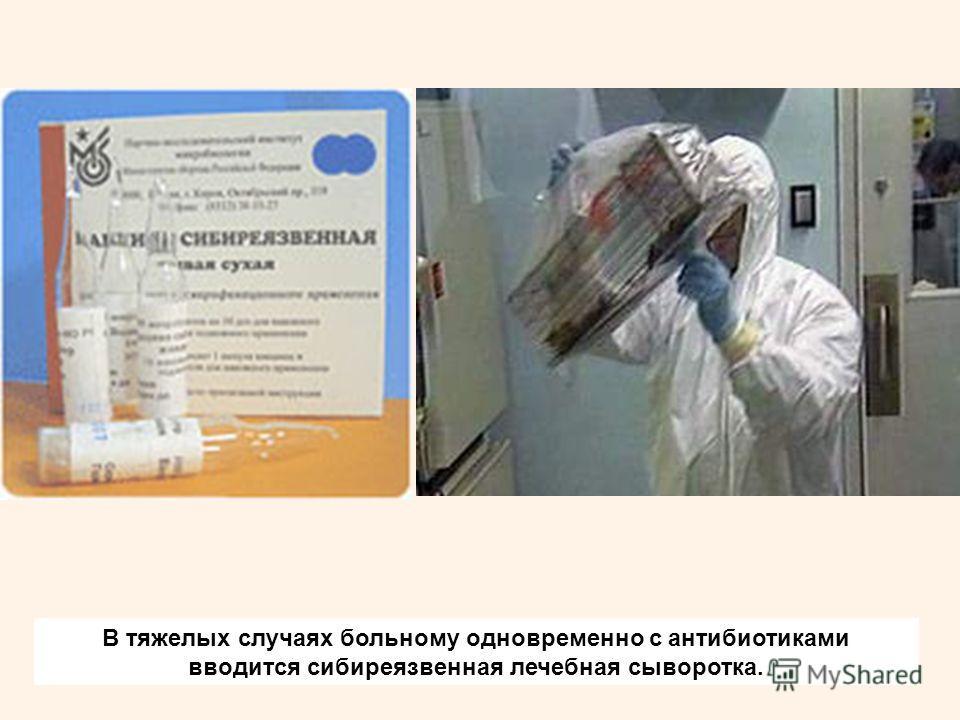 В тяжелых случаях больному одновременно с антибиотиками вводится сибиреязвенная лечебная сыворотка.