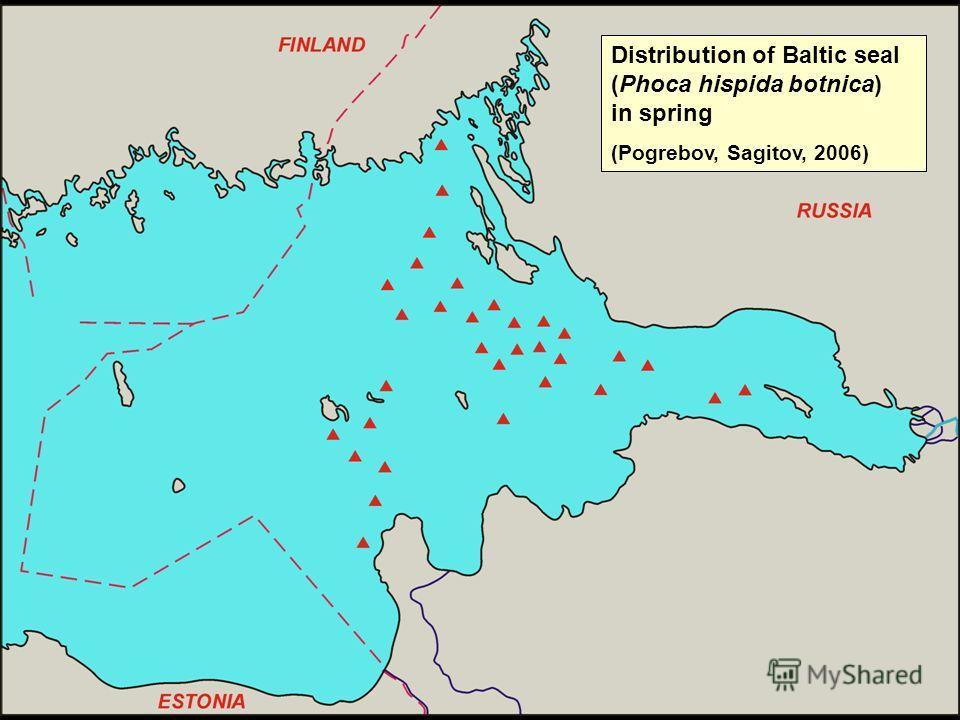 Distribution of Baltic seal (Phoca hispida botnica) in spring (Pogrebov, Sagitov, 2006)