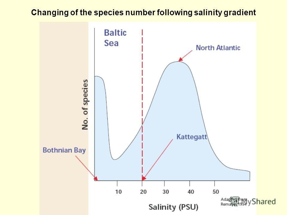 Changing of the species number following salinity gradient