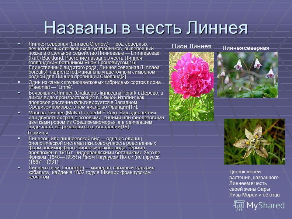 Названы в честь Линнея Линнея северная (Linnaea Gronov.) род северных вечнозелёных стелющихся кустарничков, выделенный позже в отдельное семейство Линнеевые Linnaeaceae (Raf.) Backlund. Растение названо в честь Линнея голландским ботаником Яном Гроно