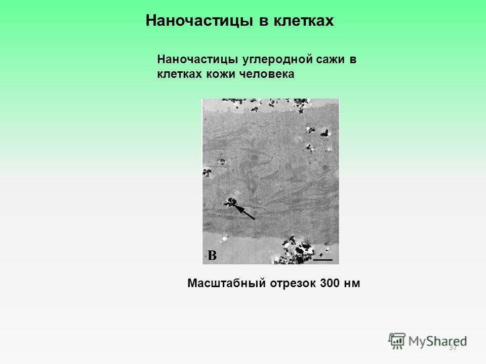 37 Масштабный отрезок 300 нм Наночастицы в клетках Наночастицы углеродной сажи в клетках кожи человека
