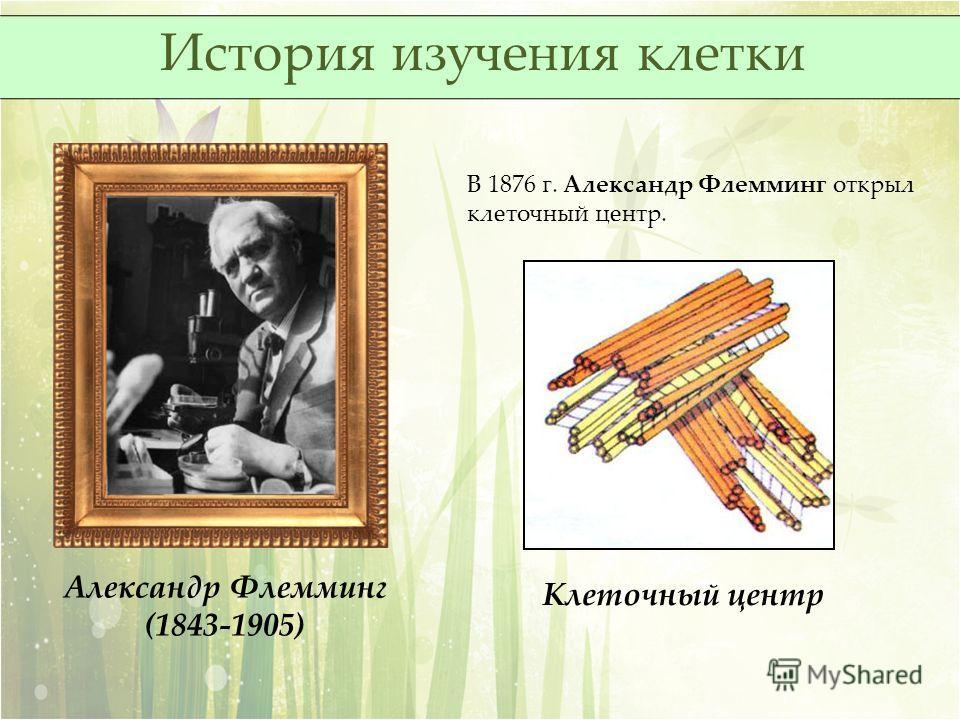 В 1876 г. Александр Флемминг открыл клеточный центр. Александр Флемминг (1843-1905) Клеточный центр История изучения клетки