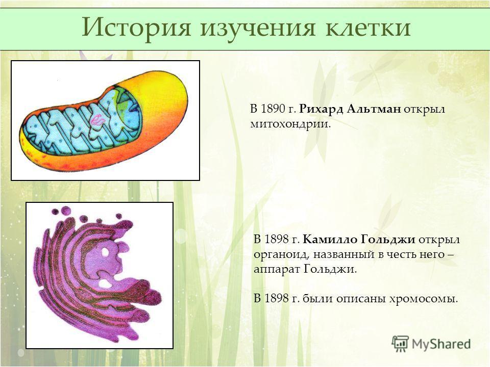 В 1890 г. Рихард Альтман открыл митохондрии. В 1898 г. Камилло Гольджи открыл органоид, названный в честь него – аппарат Гольджи. В 1898 г. были описаны хромосомы. История изучения клетки