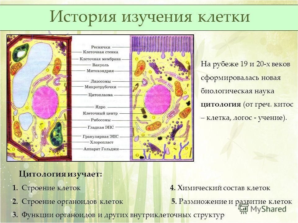 На рубеже 19 и 20-х веков сформировалась новая биологическая наука цитология (от греч. китос – клетка, логос - учение). Цитология изучает: 1. Строение клеток 4. Химический состав клеток 2. Строение органоидов клеток 5. Размножение и развитие клеток 3