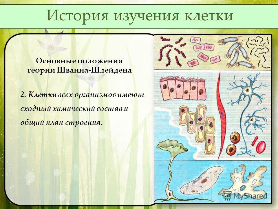 Основные положения теории Шванна-Шлейдена 2. Клетки всех организмов имеют сходный химический состав и общий план строения. История изучения клетки