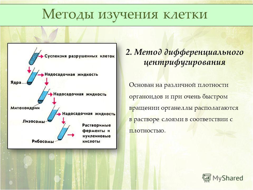 2. Метод дифференциального центрифугирования Основан на различной плотности органоидов и при очень быстром вращении органеллы располагаются в растворе слоями в соответствии с плотностью. Методы изучения клетки