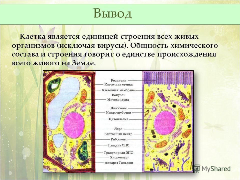 Клетка является единицей строения всех живых организмов (исключая вирусы). Общность химического состава и строения говорит о единстве происхождения всего живого на Земле. Вывод