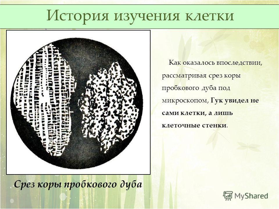 Срез коры пробкового дуба Как оказалось впоследствии, рассматривая срез коры пробкового дуба под микроскопом, Гук увидел не сами клетки, а лишь клеточные стенки. История изучения клетки