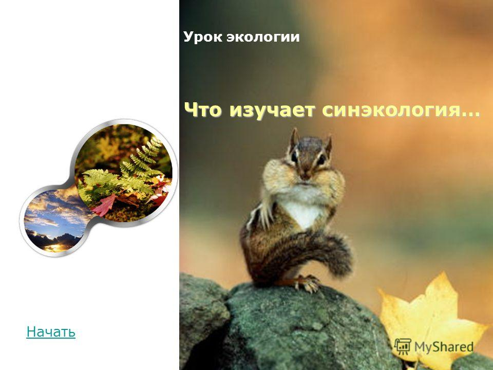 Начать Что изучает синэкология… Урок экологии Что изучает синэкология…