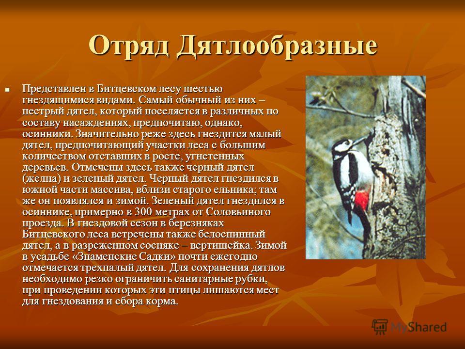 Отряд Дятлообразные Представлен в Битцевском лесу шестью гнездящимися видами. Самый обычный из них – пестрый дятел, который поселяется в различных по составу насаждениях, предпочитаю, однако, осинники. Значительно реже здесь гнездится малый дятел, пр