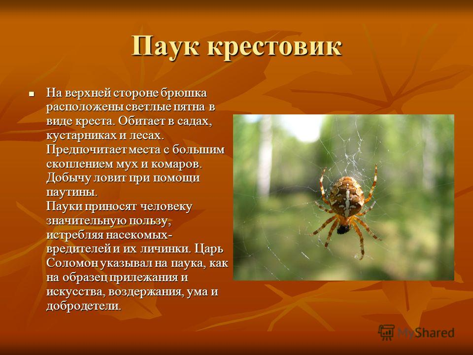 Паук крестовик На верхней стороне брюшка расположены светлые пятна в виде креста. Обитает в садах, кустарниках и лесах. Предпочитает места с большим скоплением мух и комаров. Добычу ловит при помощи паутины. Пауки приносят человеку значительную польз