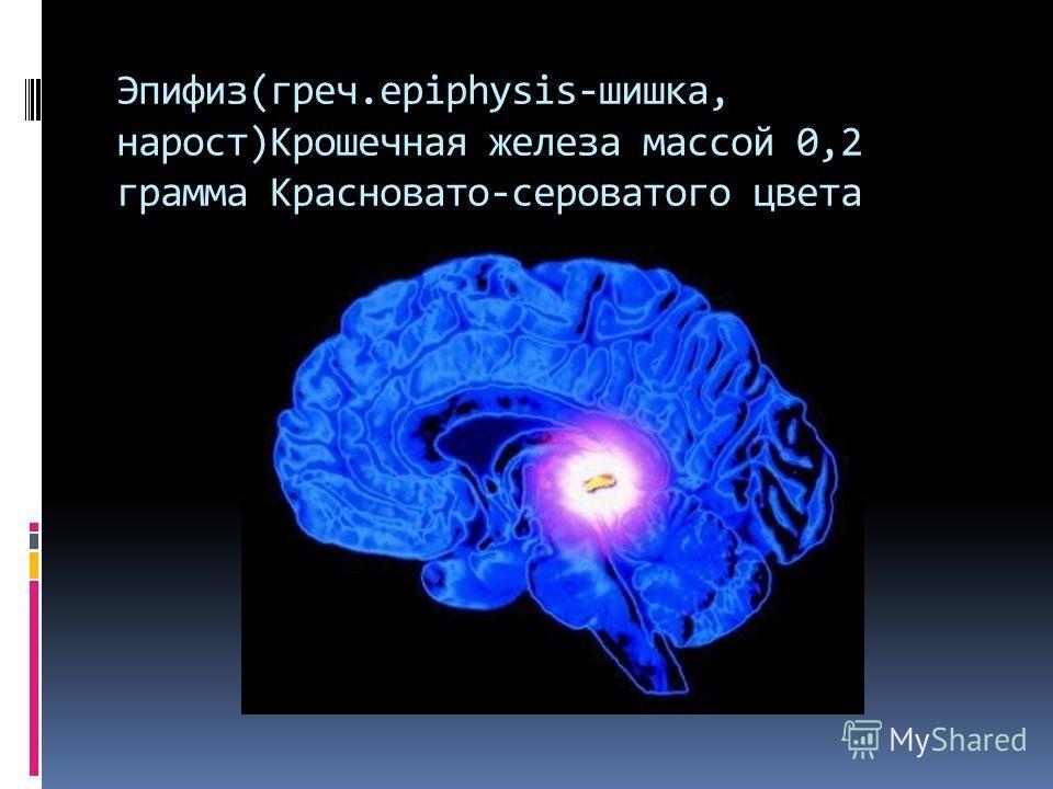 Эпифиз(греч.epiphysis-шишка, нарост)Крошечная железа массой 0,2 грамма Красновато-сероватого цвета