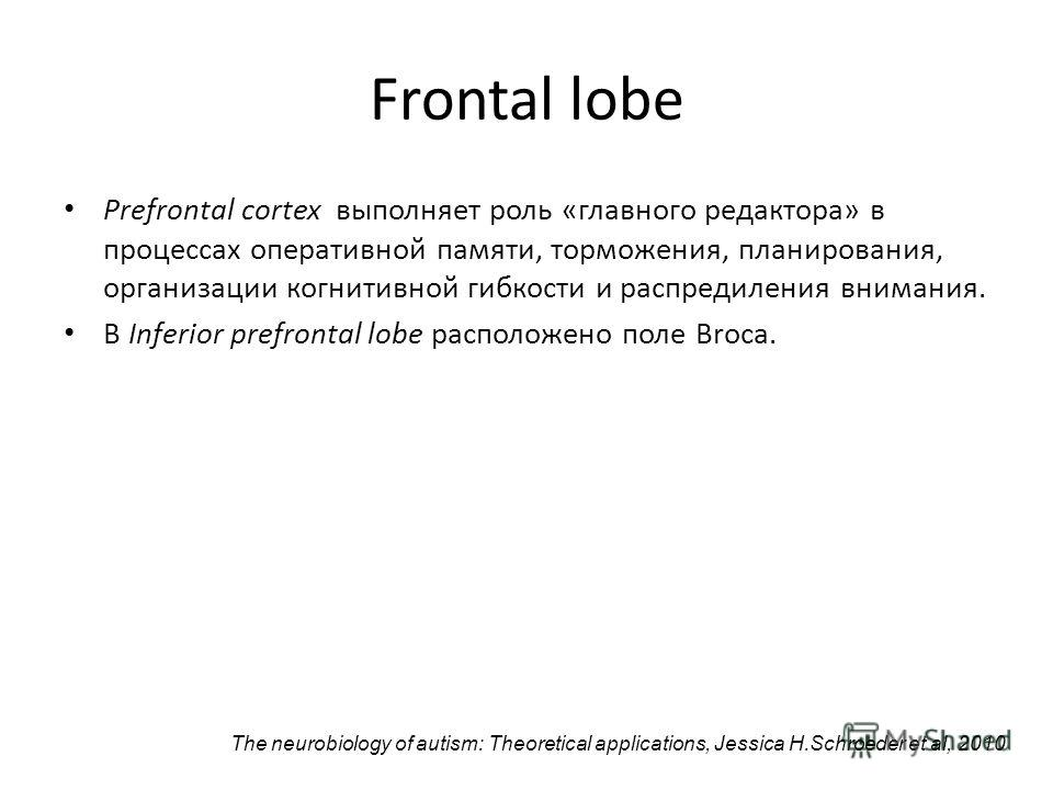 Frontal lobe Prefrontal cortex выполняет роль «главного редактора» в процессах оперативной памяти, торможения, планирования, организации когнитивной гибкости и распредиления внимания. В Inferior prefrontal lobe расположено поле Broca. The neurobiolog