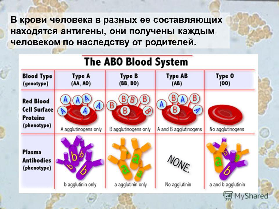 В крови человека в разных ее составляющих находятся антигены, они получены каждым человеком по наследству от родителей.