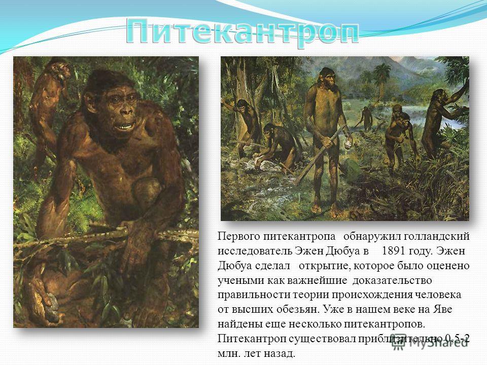 Первого питекантропа обнаружил голландский исследователь Эжен Дюбуа в 1891 году. Эжен Дюбуа сделал открытие, которое было оценено учеными как важнейшие доказательство правильности теории происхождения человека от высших обезьян. Уже в нашем веке на Я
