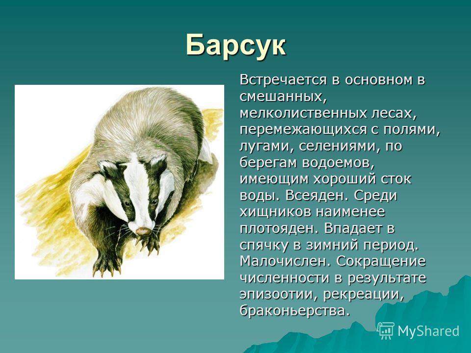 Барсук Встречается в основном в смешанных, мелколиственных лесах, перемежающихся с полями, лугами, селениями, по берегам водоемов, имеющим хороший сток воды. Всеяден. Среди хищников наименее плотояден. Впадает в спячку в зимний период. Малочислен. Со