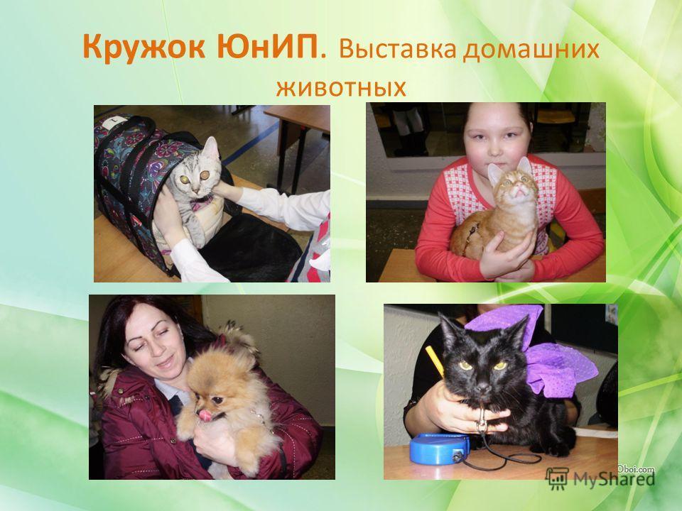 Кружок ЮнИП. Выставка домашних животных