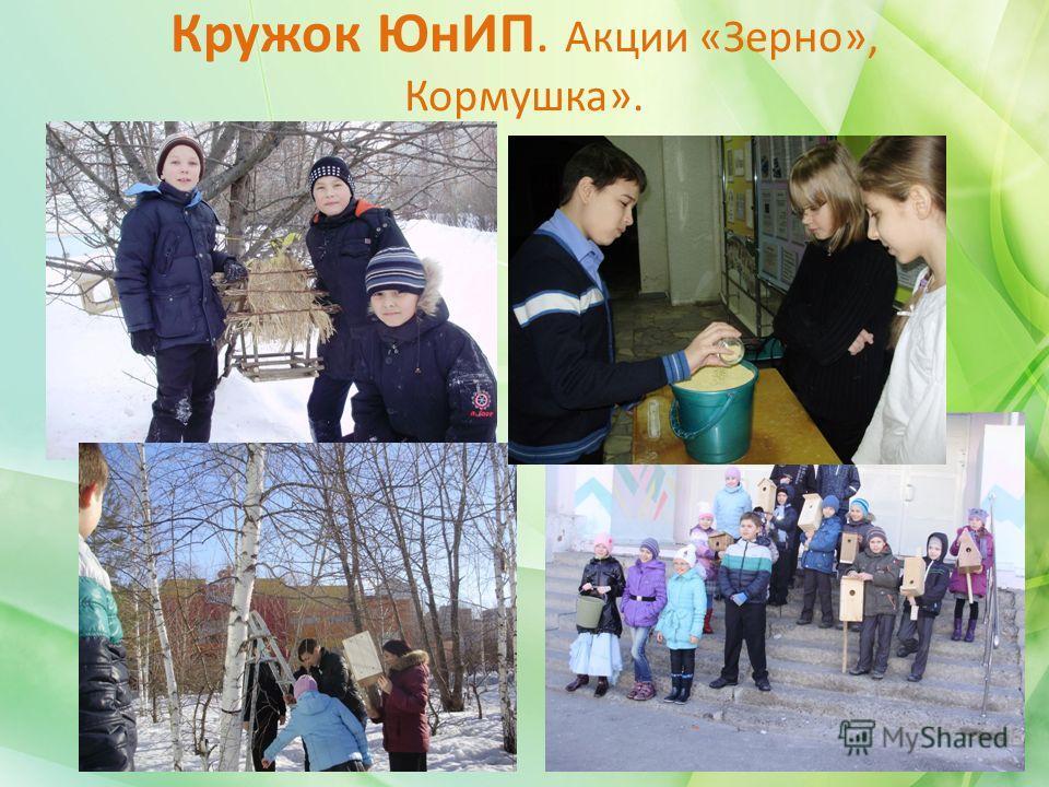 Кружок ЮнИП. Акции «Зерно», Кормушка».