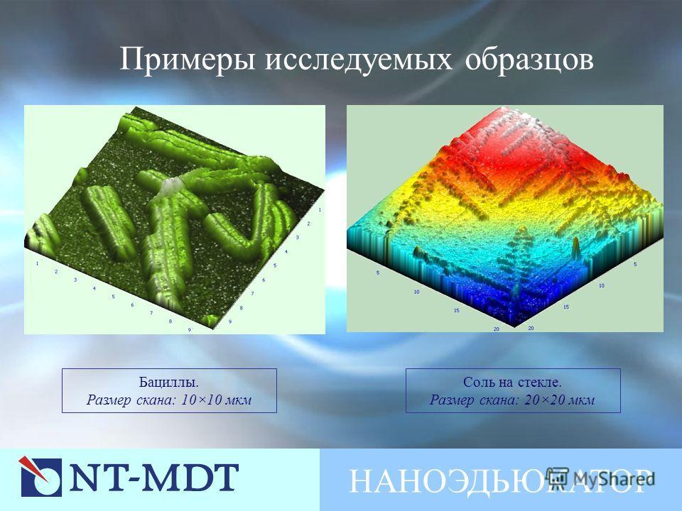 НАНОЭДЬЮКАТОР Примеры исследуемых образцов Бациллы. Размер скана: 10×10 мкм Соль на стекле. Размер скана: 20×20 мкм