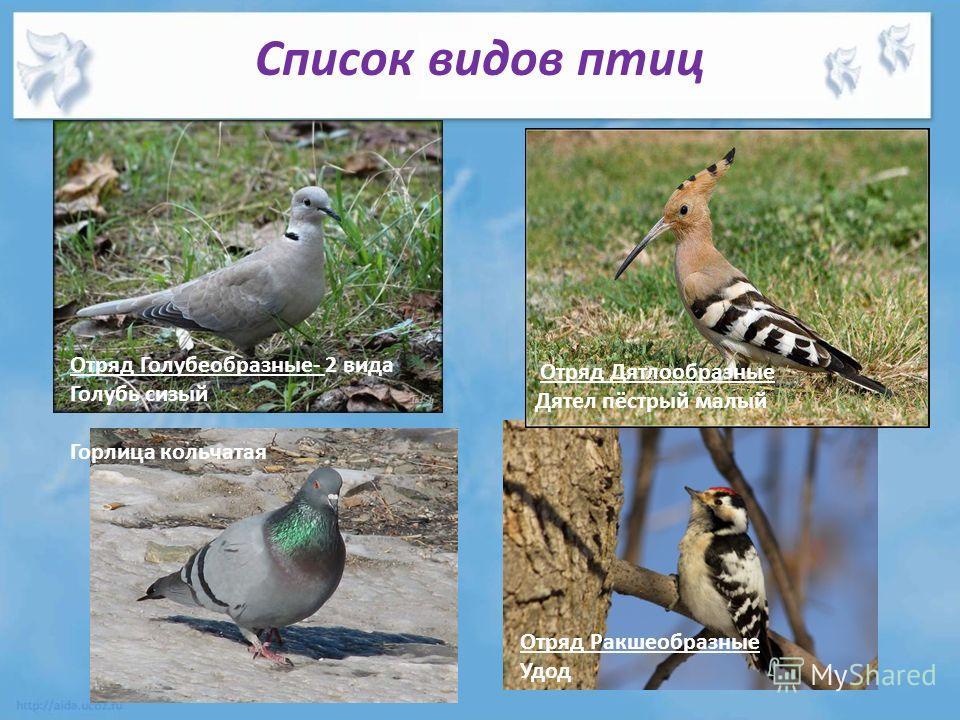 Список видов птиц Отряд Голубеобразные- 2 вида Голубь сизый Горлица кольчатая Отряд Дятлообразные Дятел пёстрый малый Отряд Ракшеобразные Удод