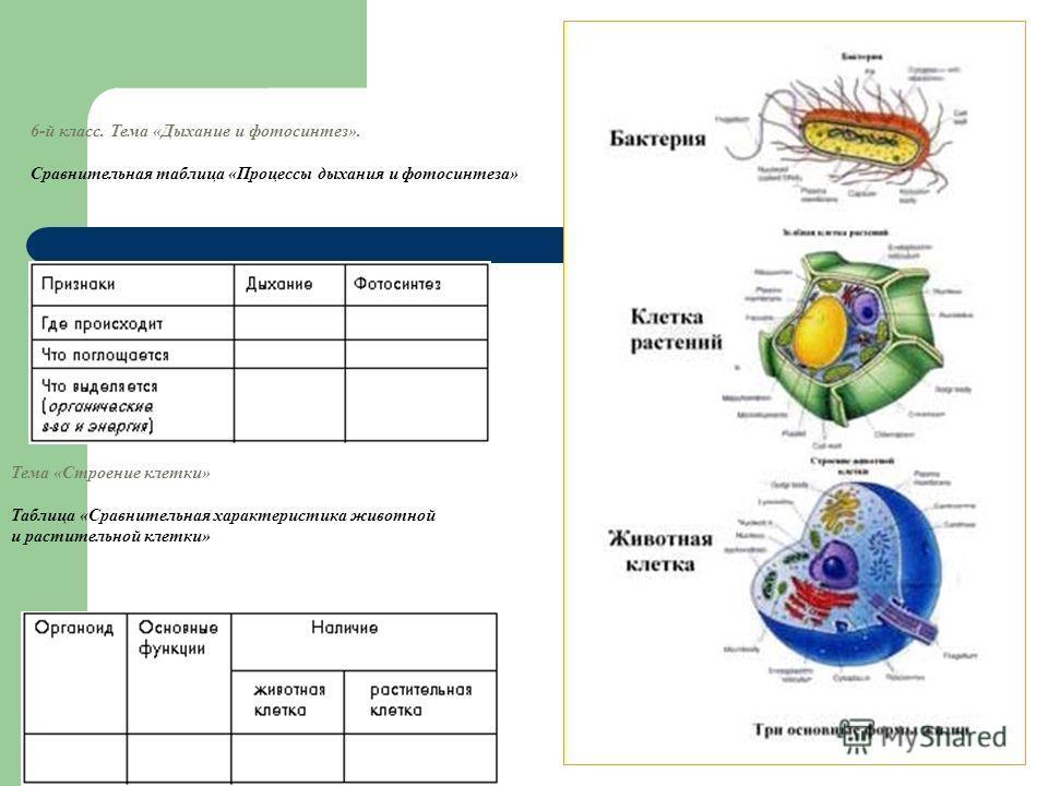 6-й класс. Тема «Дыхание и фотосинтез». Сравнительная таблица «Процессы дыхания и фотосинтеза» Тема «Строение клетки» Таблица «Сравнительная характеристика животной и растительной клетки»
