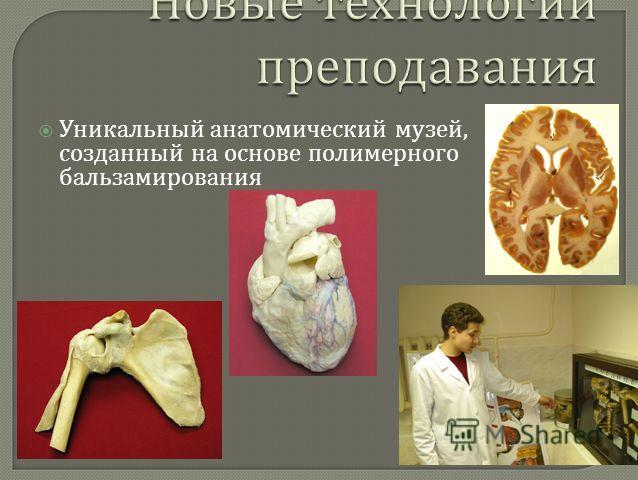 Уникальный анатомический музей, созданный на основе полимерного бальзамирования