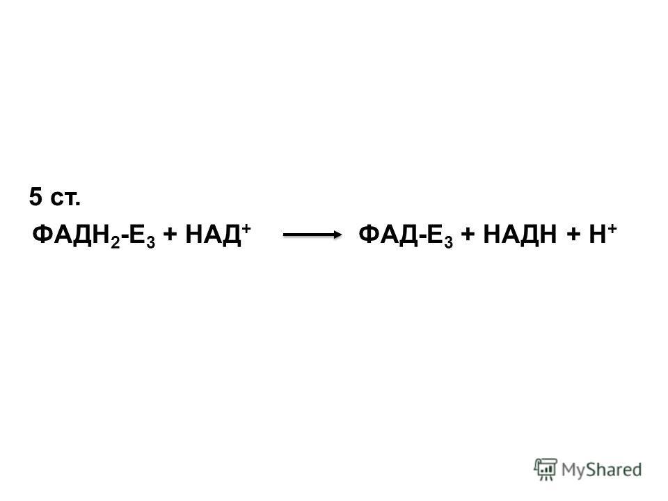 5 ст. ФАДН 2 -Е 3 + НАД + ФАД-Е 3 + НАДН + Н +
