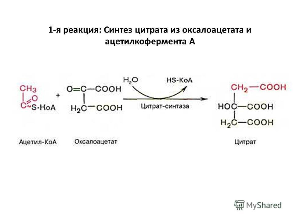 1-я реакция: Синтез цитрата из оксалоацетата и ацетилкофермента А