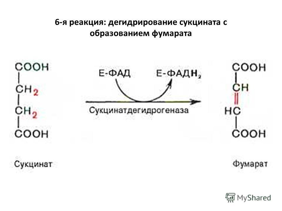 6-я реакция: дегидрирование сукцината с образованием фумарата