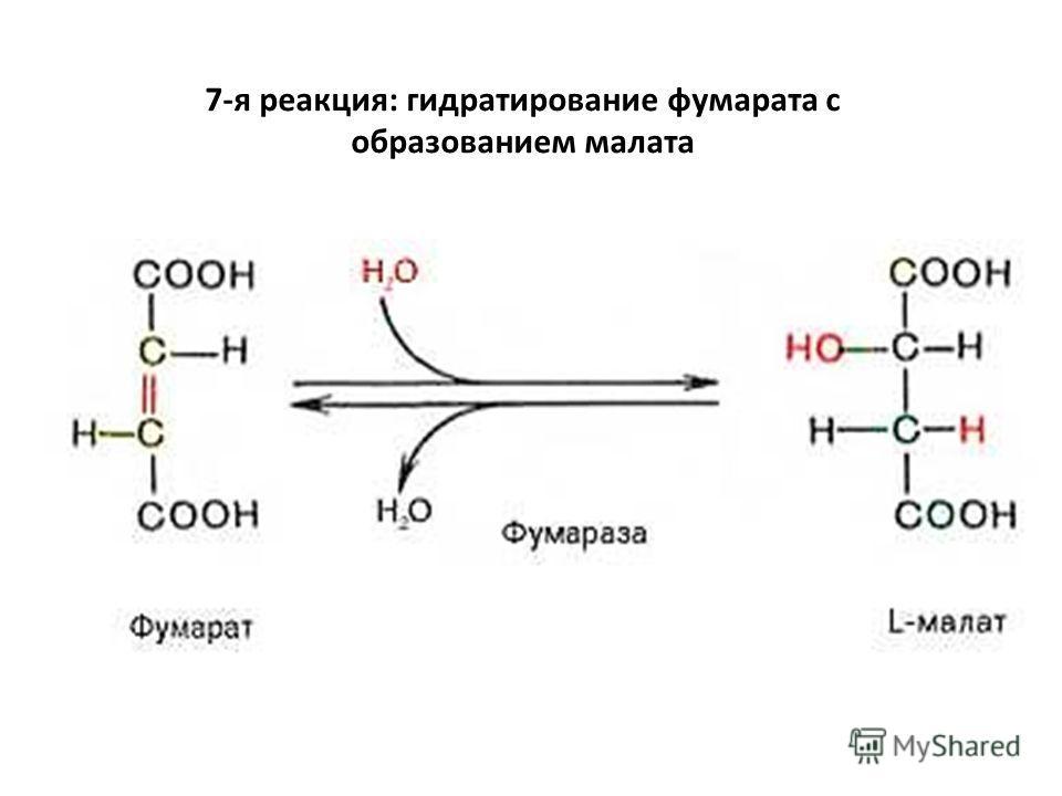7-я реакция: гидратирование фумарата с образованием малата