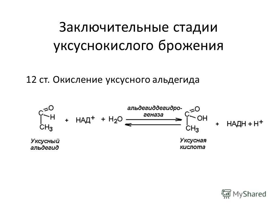 Заключительные стадии уксуснокислого брожения 12 ст. Окисление уксусного альдегида