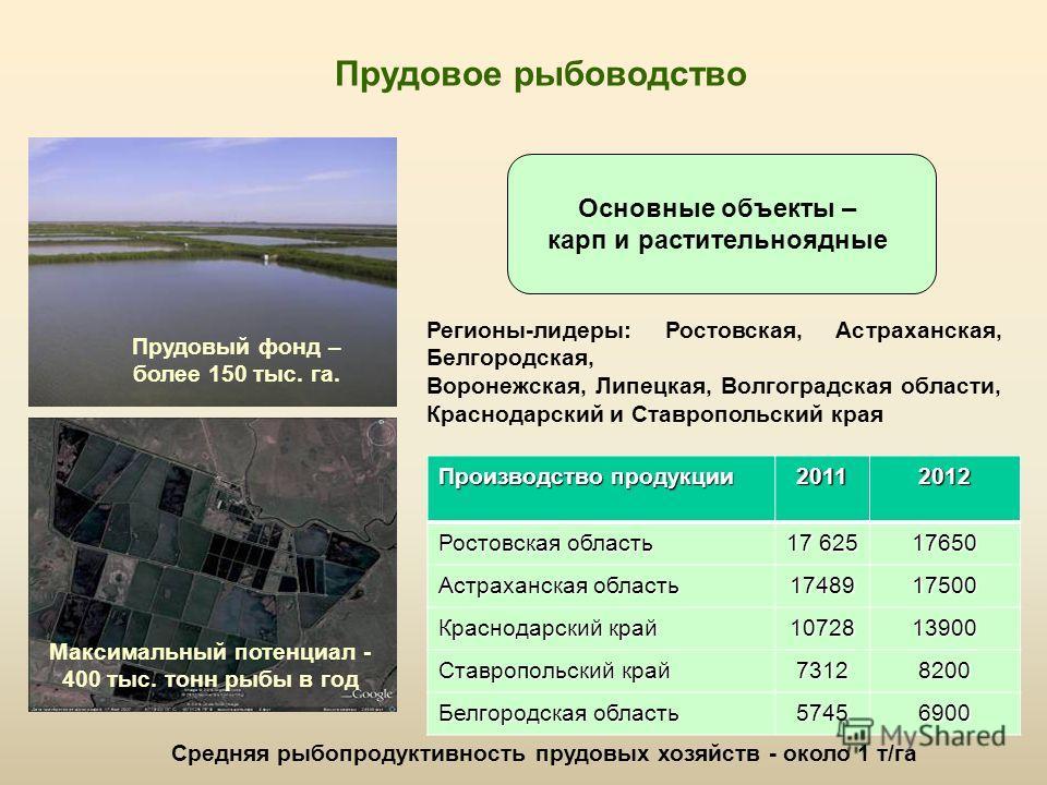 Основные объекты – карп и растительноядные Прудовое рыбоводство Прудовый фонд – более 150 тыс. га. Средняя рыбопродуктивность прудовых хозяйств - окол