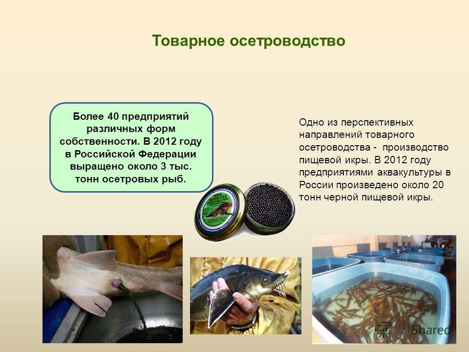 Товарное осетроводство Одно из перспективных направлений товарного осетроводства - производство пищевой икры. В 2012 году предприятиями аквакультуры в