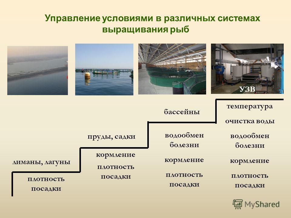 Управление условиями в различных системах выращивания рыб лиманы, лагуны пруды, садки бассейны плотность посадки УЗВ кормление плотность посадки водоо