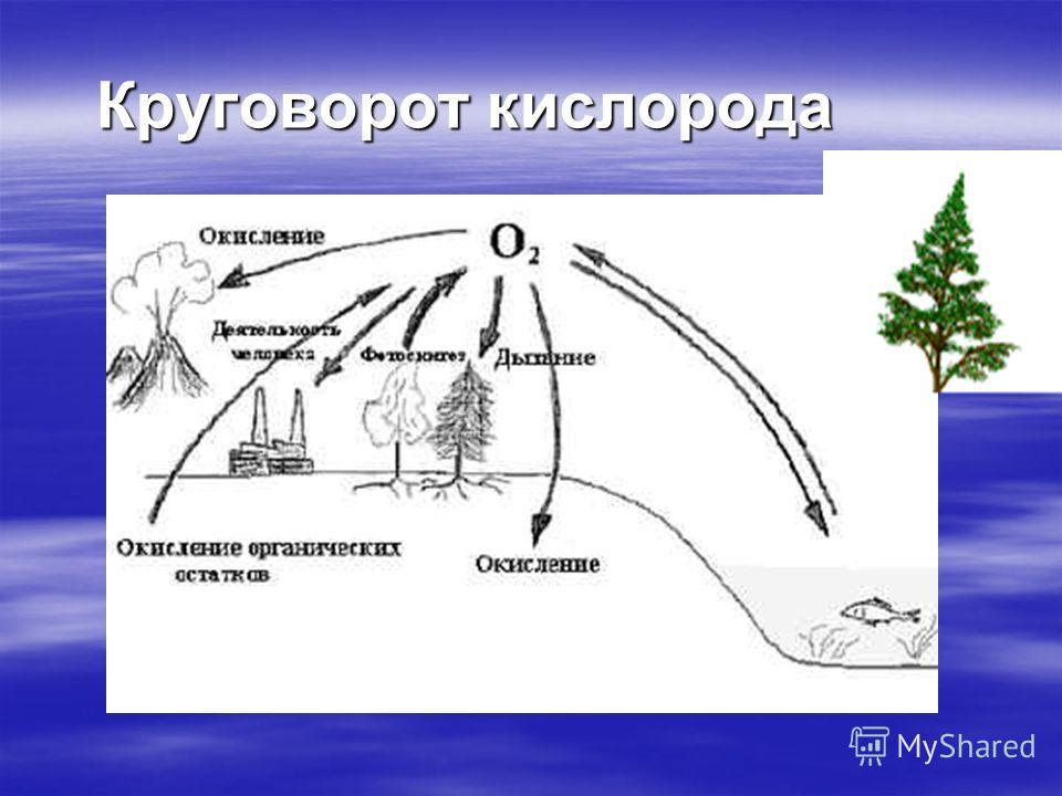 Круговорот веществ в биосфере Деятельность живых организмов в биосфере сопровождается извлечением из окружающей среды больших количеств минеральных веществ. После смерти организмов составляющие их химические элементы возвращаются в окружающую среду.