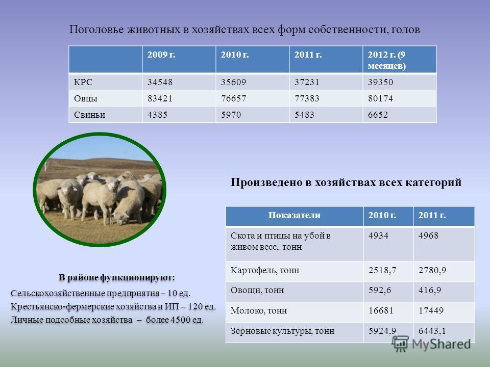 2009 г.2010 г.2011 г.2012 г. (9 месяцев) КРС34548356093723139350 Овцы83421766577738380174 Свиньи4385597054836652 Поголовье животных в хозяйствах всех форм собственности, голов Показатели2010 г.2011 г. Скота и птицы на убой в живом весе, тонн 49344968