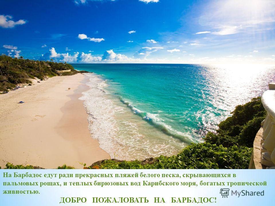 На Барбадос едут ради прекрасных пляжей белого песка, скрывающихся в пальмовых рощах, и теплых бирюзовых вод Карибского моря, богатых тропической живностью. ДОБРО ПОЖАЛОВАТЬ НА БАРБАДОС!