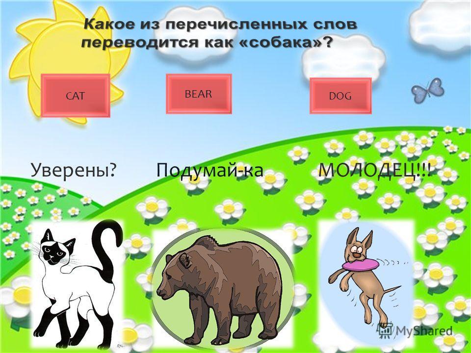 CAT BEAR DOG Уверены?Подумай-каМОЛОДЕЦ!!!