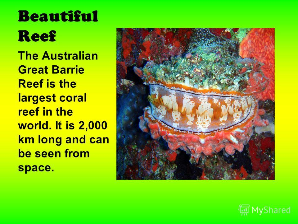 Beautiful Reef The Australian Great Barrie Reef is the largest coral reef in the world. It is 2,000 km long and can be seen from space.