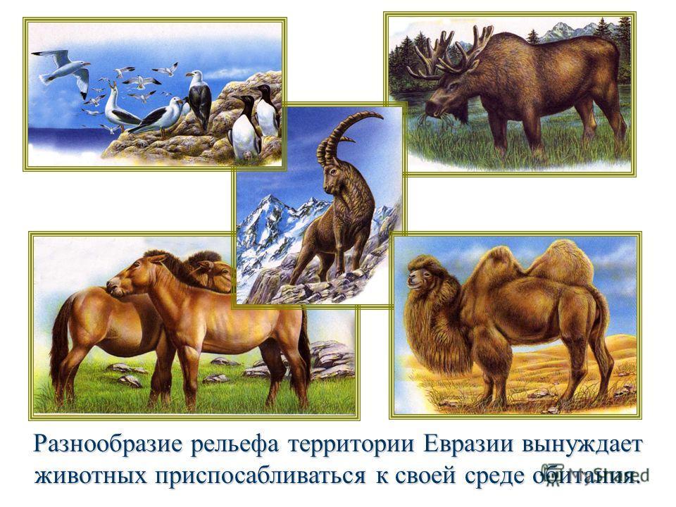 Разнообразие рельефа территории Евразии вынуждает животных приспосабливаться к своей среде обитания.