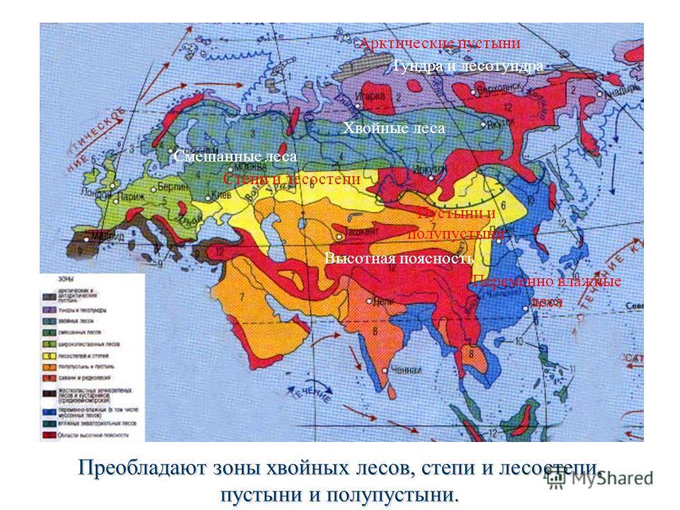 Арктические пустыни Тундра и лесотундра Хвойные леса Смешанные леса Степи и лесостепи Пустыни и полупустыни Высотная поясность Переменно влажные леса На территории Евразии присутствуют все природные зоны. Преобладают зоны хвойных лесов, степи и лесос