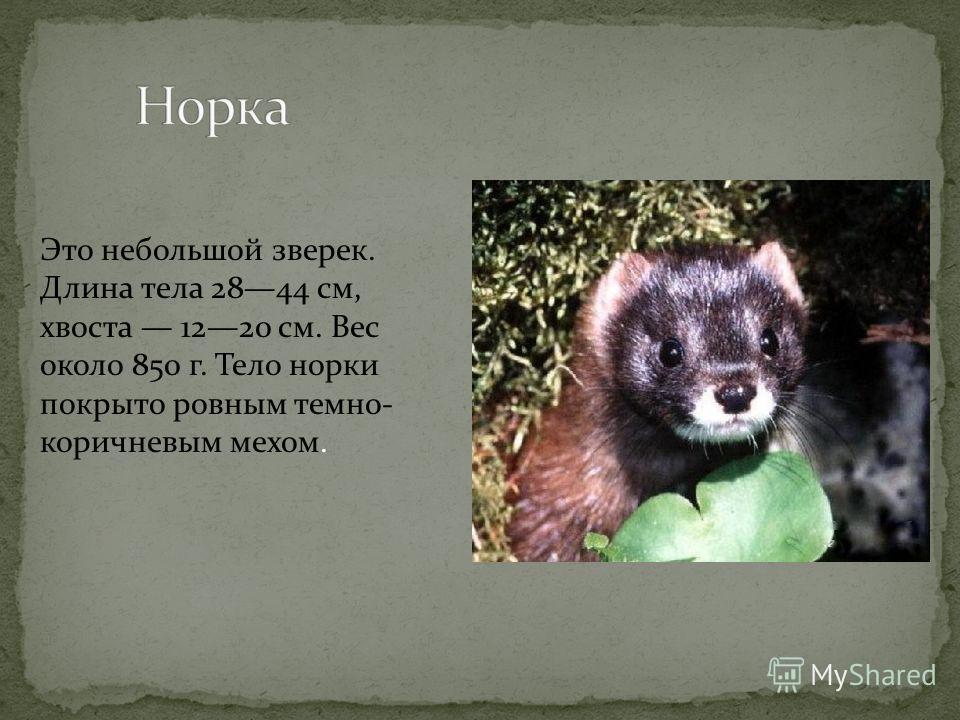 -Изучить редких зверей Волгоградской области -Познакомить ребят с редкими видами зверей, обитающих в Волгоградской области -Научить относиться к ним бережно