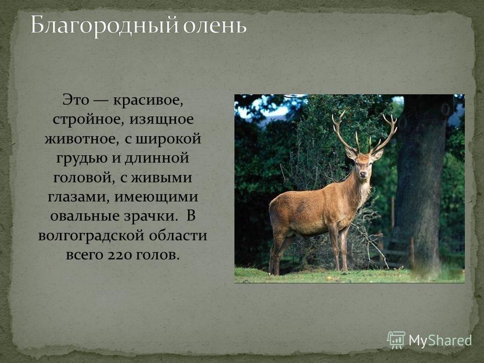 Это небольшой зверек. Длина тела 2844 см, хвоста 1220 см. Вес около 850 г. Тело норки покрыто ровным темно- коричневым мехом.