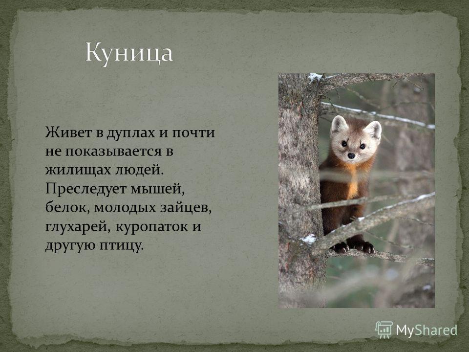 Это красивое, стройное, изящное животное, с широкой грудью и длинной головой, с живыми глазами, имеющими овальные зрачки. В волгоградской области всего 220 голов.