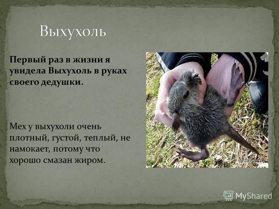 Живет в дуплах и почти не показывается в жилищах людей. Преследует мышей, белок, молодых зайцев, глухарей, куропаток и другую птицу.