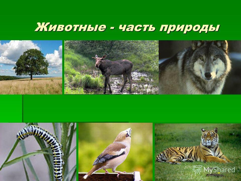 Животные - часть природы