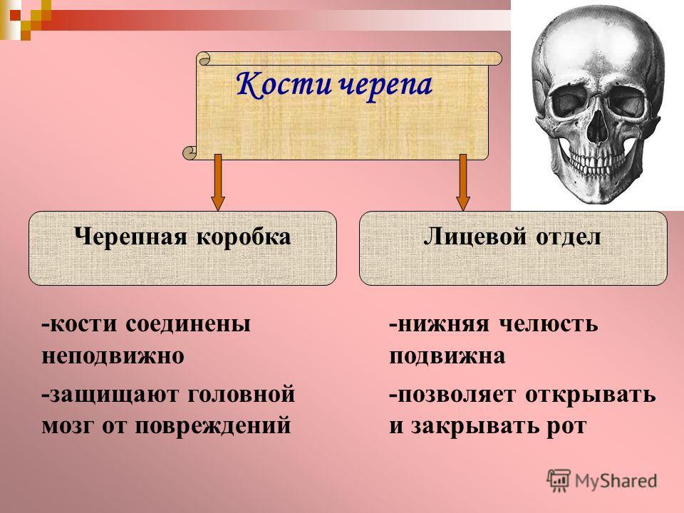 Кости черепа Черепная коробкаЛицевой отдел -кости соединены неподвижно -защищают головной мозг от повреждений -нижняя челюсть подвижна -позволяет открывать и закрывать рот